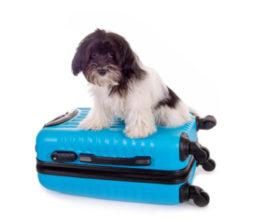 koffer-mit-hartschale-und-hund