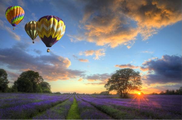 heissluftballons-fliegen-ueber-lavendelfeld